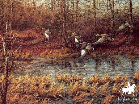 Старт выдачи разрешений на весеннюю охоту